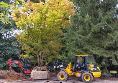 Baumverpflanzungen